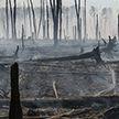 Пожары на торфяниках в Эстонии мешают поискам упавшей ракеты, выпущенной авиацией Испании во время учений