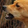 Бездомные собаки загрызли четырехлетнего ребенка в России