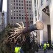 Предновогодний казус в Нью-Йорке: местным жителям не понравилась главная городская ёлка