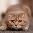 «Я аж дышать перестала»: кошка хотела проскользнуть мимо собаки и попала на видео. Смотрите, чем все закончилось
