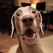 «Дух времени в одном взгляде»: реакция собаки на кашель хозяйки рассмешила Сеть
