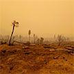 Число погибших во время лесных пожаров в Калифорнии возросло до 44 человек: штат объявлен зоной стихийного бедствия
