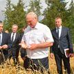 Лукашенко: Выборы – это вторично, а хлеб нужен всегда