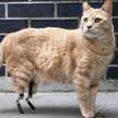 «Вся пресса пишет обо мне. Но я остаюсь скромным»: кот с протезами стал звездой Instagram