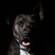 Хозяйка разыграла пса, чтобы показать его волнение (ВИДЕО)