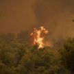 Лесной пожар бушует на острове Самос
