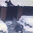 Криминальный курьёз: граждане Украины хотели выбить несуществующий долг с белоруса, но ошиблись адресом