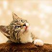Хозяйка напугала кота фильтром Instagram