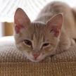 Кошка захотела лечь на подушку, но на ней спал лабрадор. Тогда пушистая придумала хитрый план! Посмотрите, что она сделала! (ВИДЕО)