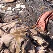 Безумный звонок в Мозырском районе: пенсионерка убила пенсионерку