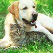 Посмотрите, как лабрадор соскучился по коту! Еще чуть-чуть – и пушистого задушат! (ВИДЕО)