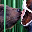 В России назвали способ пережить встречу с медведем