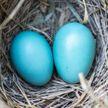 «Помогите определить, чьи яйца». Находка под ванной напугала хозяев дома, но развязка оказалась неожиданной!