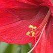 Самый большой в мире цветочный аукцион в Голландии: 20 млн свежесрезанных цветов с плантаций Африки, Америки и Европы