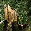 Последствия сильного ветра с ливнем устраняют в Горках