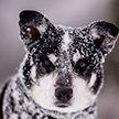 В Беларуси сегодня – дожди и мокрый снег