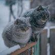 Мокрый снег с дождем и сильный ветер – прогноз погоды на 11 марта