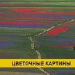 Сотни туристов съезжаются на цветущие луга в Италии, которые напоминают картины импрессионистов