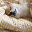 7+ фото очень милых животных, которые очень сладко спят