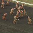 «Тираннозавры» устроили спринт на ипподроме в США