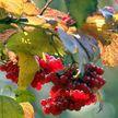До +27°С ожидается в Беларуси 23 сентября