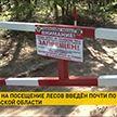 Леса закрыты для посещения в 19 районах Гомельской области из-за жары