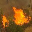 В Турции удалось взять под контроль лесные пожары
