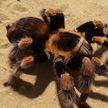 «Теперь это его квартира»: огромный паук «захватил» квартиру в России