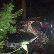 Volkswagen Passat врезался в дерево в Каменецком районе: водитель погиб