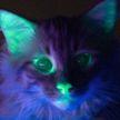 Генетики вывели светящихся кошек