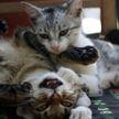 Кот загнал сам себя в тупик, смутил друга и рассмешил всех (ВИДЕО)