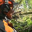 Поваленные деревья, разрушенные строения и жертвы непогоды в Витебской области. Как устраняют последствия урагана