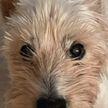 Практически через год хозяйка отыскала свою собаку. Очень трогательная история