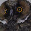 Это слишком мило! Танцующий совенок появился в Гродненском зоопарке (ВИДЕО)