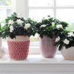 Трогательно: первый в мире приют для цветов открыли в Польше