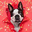 12 собак Рождества: фотосессия, чтобы обрести праздничное настроение