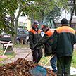 В Минске стартовал осенний месячник по наведению порядка