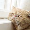 Это видео сразит вас наповал! Самый грустный кот стал звездой соцсетей – пользователи гадают, почему он так печален