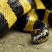 В центре Москвы в квартире нашли полосатую змею