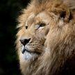Зоопарк уличили в демонстрации собаки вместо льва