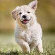 Посмотрите, как щенок провалил фотосессию! Особенно впечатляет терпение взрослой собаки! (ВИДЕО)
