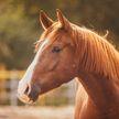 «С манго и соусом чили, очень вкусно»: девушка запекла своего любимого коня в духовке