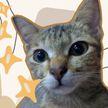 Кот сломал наушники и решил принести кое-что шокирующее взамен