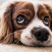 Что нельзя делать, если нашли клеща на собаке? Кинолог перечислил распространенные ошибки