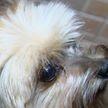 Нюх специально обученного пса пригодился при поиске коммунального сбоя