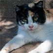Исчезнувшая кошка нашлась спустя 12 лет