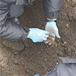 Кости ребёнка нашли в комплексе «Брестская крепость-герой»
