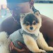 Известный футболист готов заплатить «любые деньги» за украденную собаку