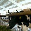 Генпрокуратура проводит мониторинг сельхозпредприятий в регионах: возбуждены уголовные дела