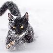 Кот впервые в жизни увидел снег – его реакция рассмешила Сеть до слез